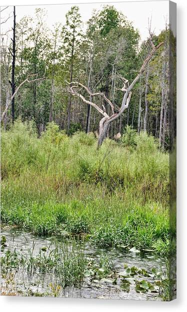 Okefenokee Canvas Print - Rainy Day To Canoe by Jan Amiss Photography