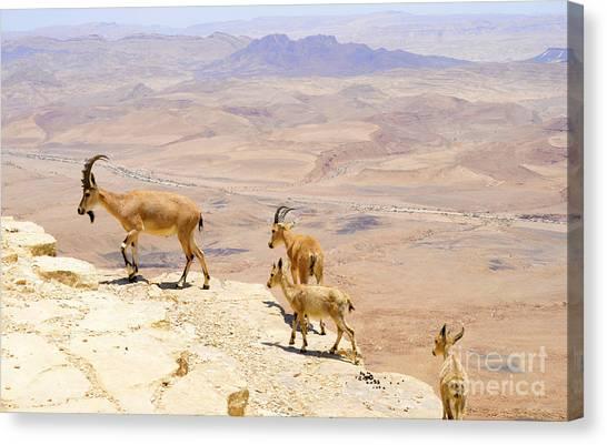 Negev Desert Canvas Print - Ramon Crater Negev Israel by Amir Paz