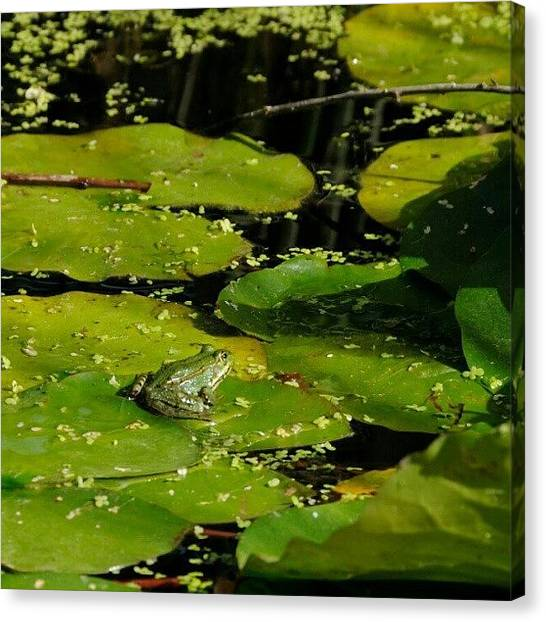 Frogs Canvas Print - Rana En Un Estanque De #barcelona #frog by Christian Gomez