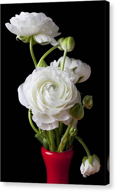 White Flower Canvas Print - Ranunculus In Red Vase by Garry Gay
