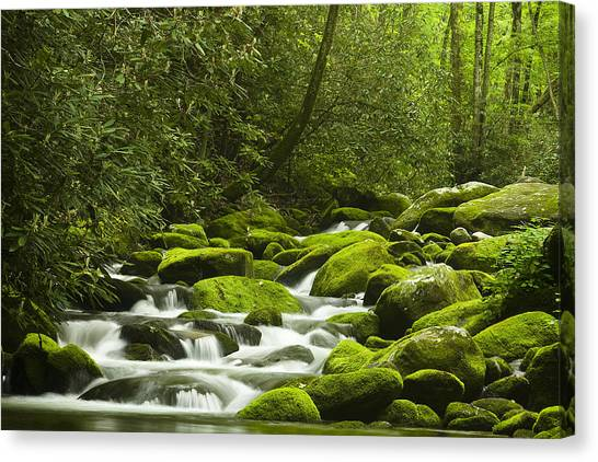 River Scenes Canvas Print - Rapids At Springtime by Andrew Soundarajan
