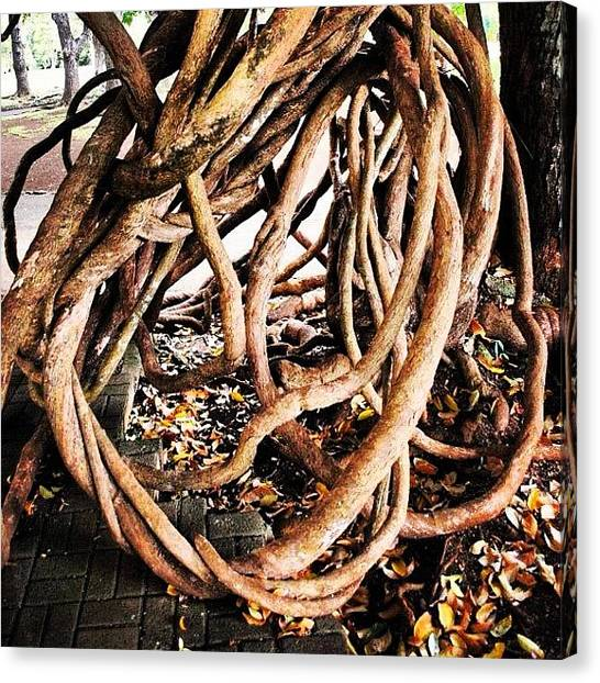 Environment Canvas Print - Rare And Lovely Intertwining Tree Root by Fotocrat Atelier