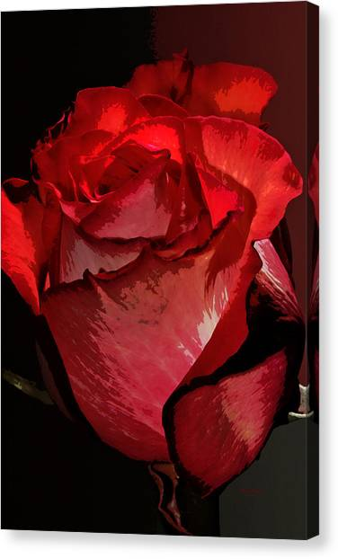 Rare Red Rose Canvas Print