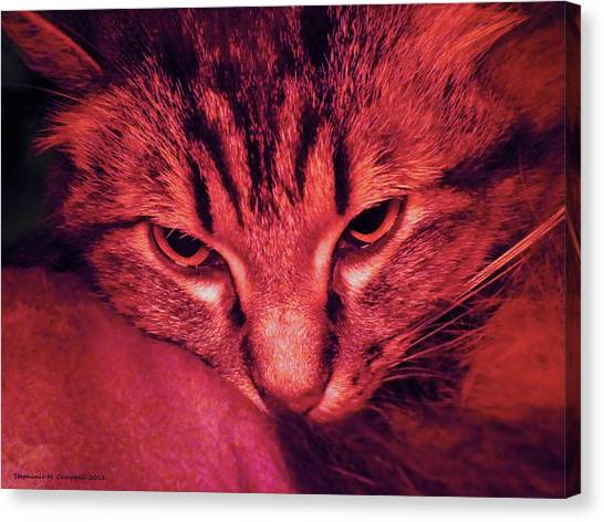 Main Coons Canvas Print - Raspberry Autumn Cat by Stephanie Campbell