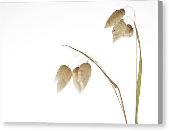 Rattlesnakes Canvas Print - Rattlesnake Grass Number 3 by Carol Leigh