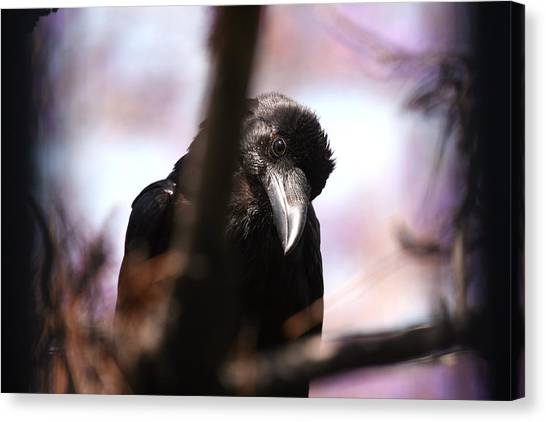 Raven Outside My Window Canvas Print