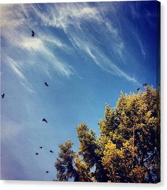Ravens Canvas Print - #ravens #birds #tree #pinetree #clouds by Karen Clarke