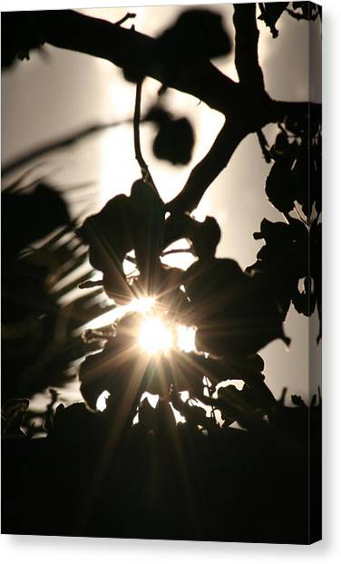 Rays Among The Leaves Canvas Print