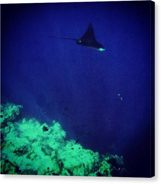 Underwater Canvas Print - Rays In The Deep #instagram by Abid Saeed