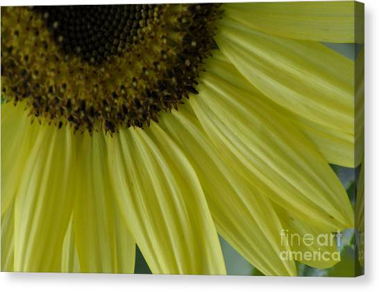 Rays Of Sunshine Canvas Print by Tamera James