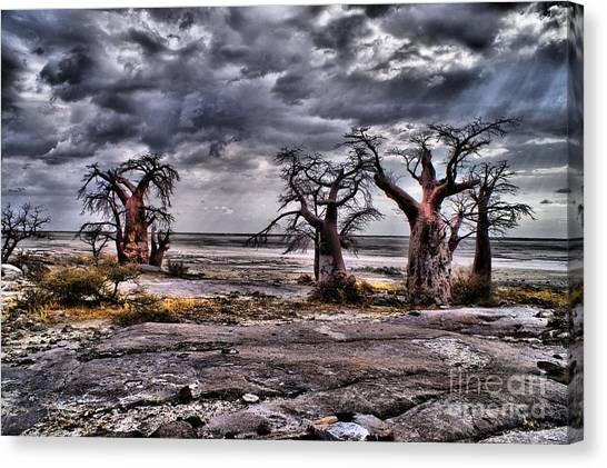 Rays On The Baobabs Canvas Print