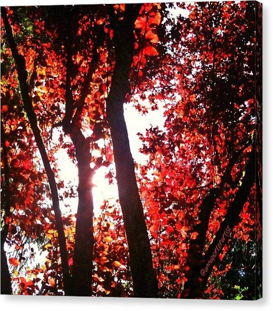 Orange Tree Canvas Print - Reaching For Glory - Afternoon Light by Anna Porter