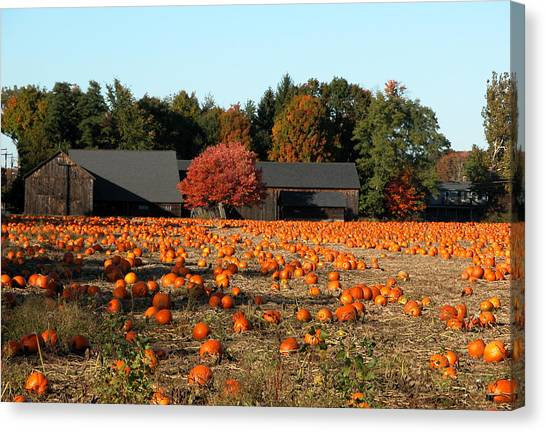 Ready For Pickin Canvas Print by Kenneth Drylie