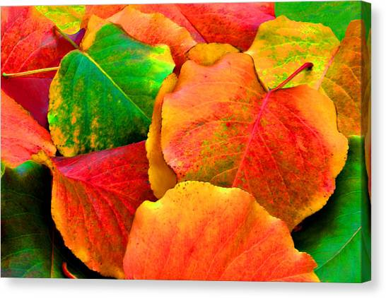 Really Colorful Fall Leaves Canvas Print