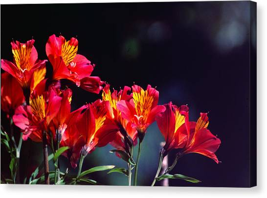 Red And Gold Canvas Print by Peter Jenkins