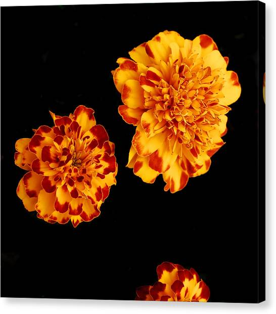 Red And Yellow Canvas Print by Barry Shaffer