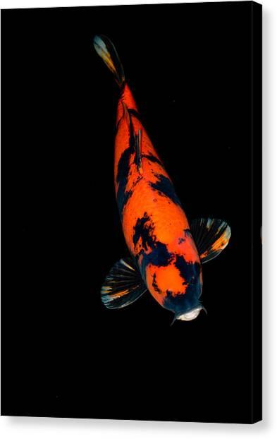 Red Bekko01 Canvas Print