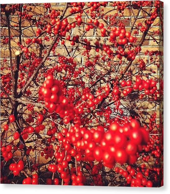 Indiana Canvas Print - Red Berries In #jasper #indiana by Melissa Wyatt