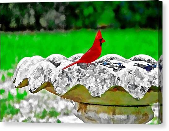 Red Bird In Bath Canvas Print