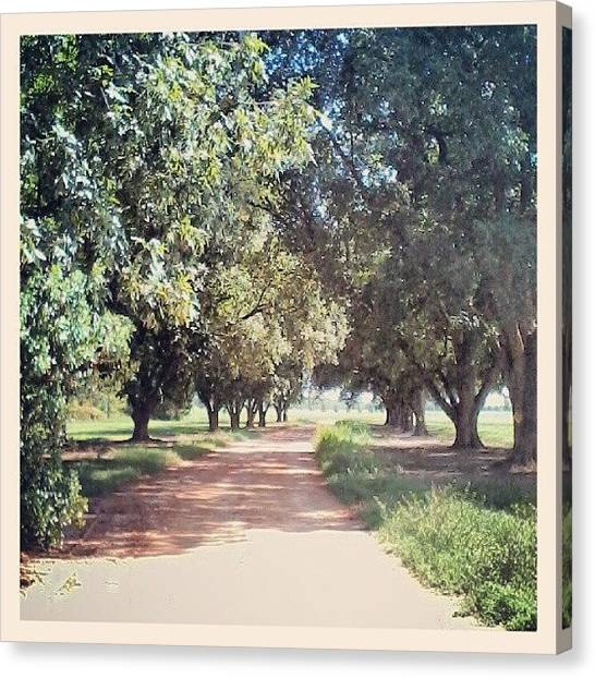 Dirt Road Canvas Print - Red Clay Lane by Jessica Berryhill