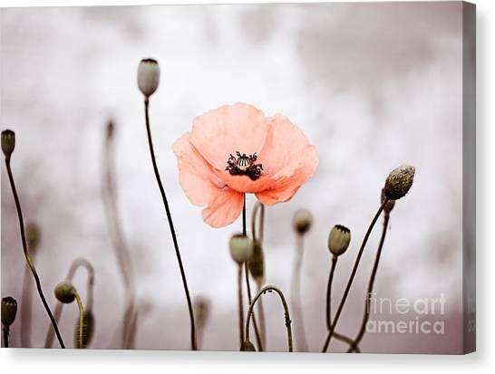 Botanical Garden Canvas Print - Red Corn Poppy Flowers 01 by Nailia Schwarz