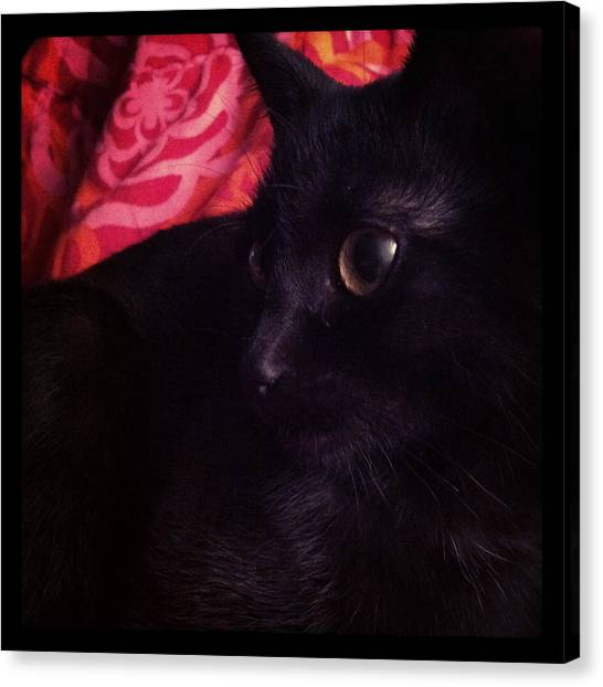 Still Life Canvas Print - Red Cover Black Cat by Mikael Andersson