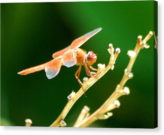 Red Dragonfly Canvas Print by Meeli Sonn