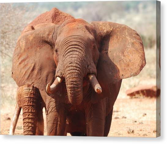 Red Elephant Drinking Canvas Print by Alan Clifford
