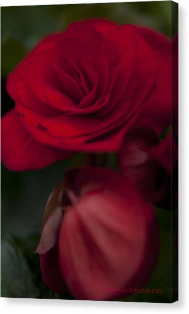 Red Flower Canvas Print by Kelvin Andow