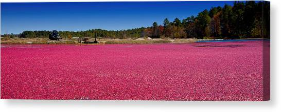 Red Harvest Canvas Print