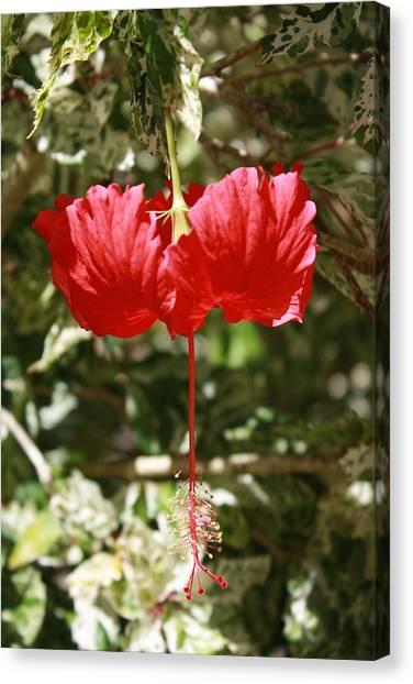 Red Hibiscus Canvas Print by Natalija Wortman
