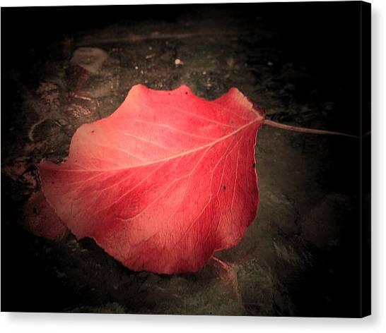 Red Leaf  Canvas Print by Beth Akerman