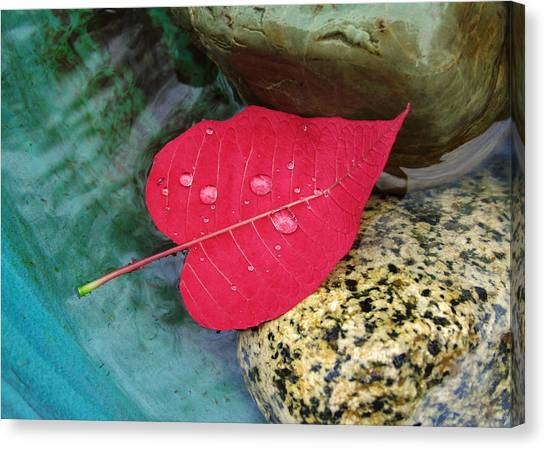 Red Leaf Love Canvas Print
