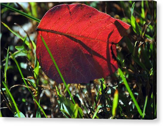 Red Leaf On Green Canvas Print