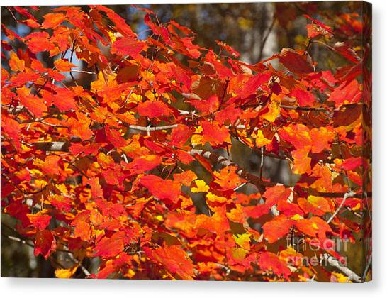 Red Leaves Canvas Print by Charles  Ridgway