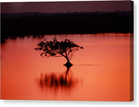 Mangrove Trees Canvas Print - Red Mangrove Sunset by Rich Franco