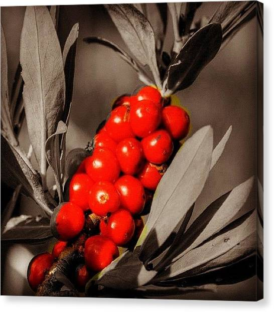 Berries Canvas Print - #red #momochrome #berry #iphone by Roberto Pagani