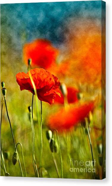 Background Canvas Print - Red Poppy Flowers 01 by Nailia Schwarz