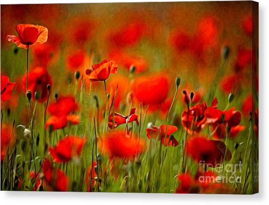 Background Canvas Print - Red Poppy Flowers 02 by Nailia Schwarz