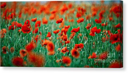 Background Canvas Print - Red Poppy Flowers 04 by Nailia Schwarz