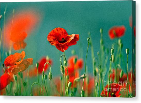 Background Canvas Print - Red Poppy Flowers 06 by Nailia Schwarz