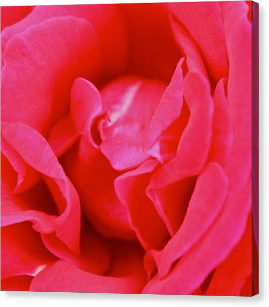 Red Roses Canvas Print - Red Rose by Justin Connor