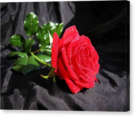 Red Rose On Black Canvas Print