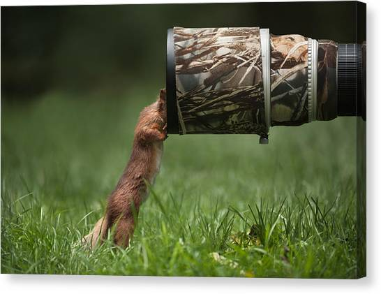 Red Squirrel Inspecting A Camera Lens. Canvas Print by Andy Astbury