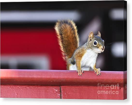 Bushy Tail Canvas Print - Red Squirrel On Railing by Elena Elisseeva