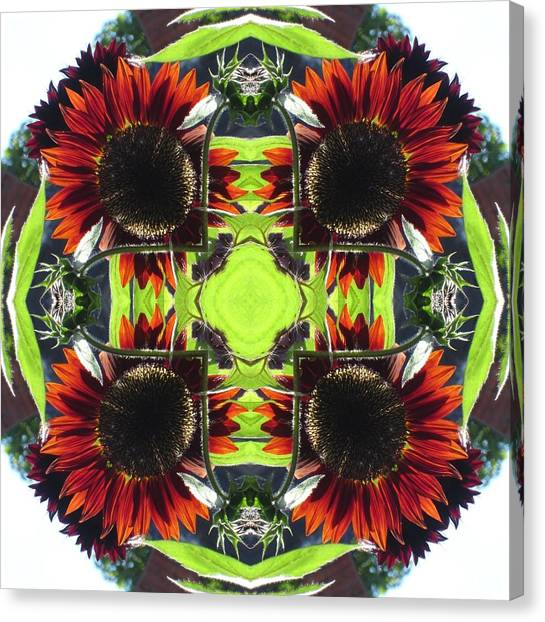 Red Sunflowers And Leaf Canvas Print