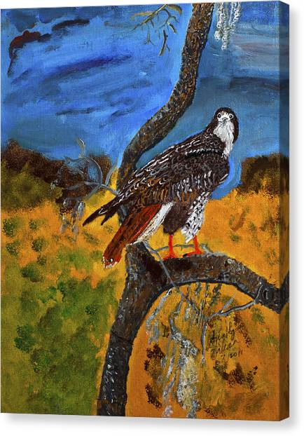 Red-tailed Hawk Perch In Tree Canvas Print