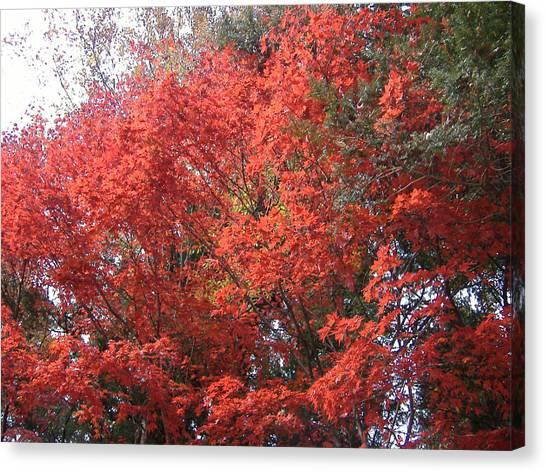 Samurai Canvas Print - Red Tree by Naxart Studio