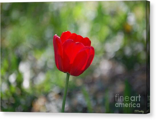 Only But A Single Tulip Canvas Print