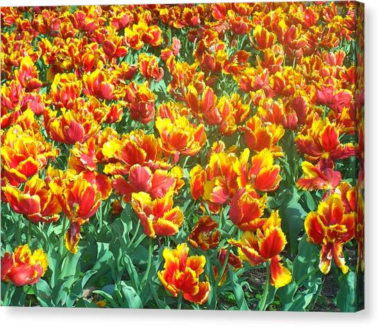 Red-yellow Tulips Canvas Print